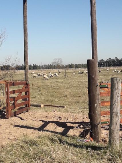Vendo Lote 10x50 En Domselaar Semi Rural