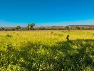 Fazenda 116 Alqueires Mato Grosso Do Sul Cód. Fms-15