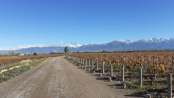 Finca 10 Has El Chilcal, Las Heras, Mendoza, Argentina