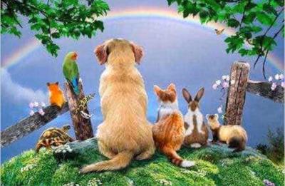 Cremación De Mascotas Eutanasia Wapp O Llamado 24hs