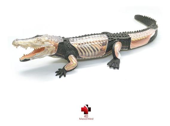 Anatomia Do Crocodilo - 4d Master Med