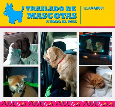 Traslado De Mascotas Puerta A Puerta En Automóvil