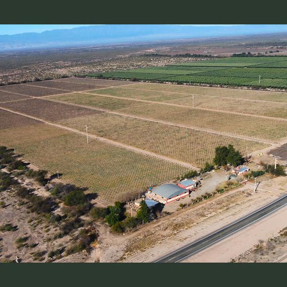 Finca Campo Vid 50 Has. En Chilecito La Rioja