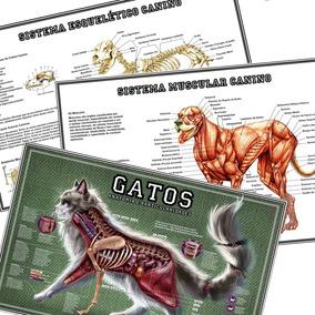 Kit 3 Mapa 65x100cm Músculos Ossos Cachorro + Anatomia Gatos