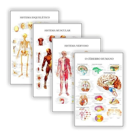 Kit 4 Posters Anatomia Humana P/ Clínica Medicina 60x90 Cm