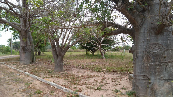 1 Mudas De Baobá