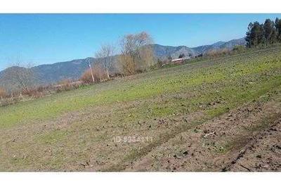 Terreno Plano, Agrícola Y Riego De 19 Hectáreas Ubicado En Chépica Cerca De Santa Cruz