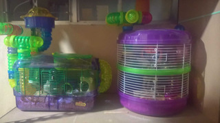 Jaulas Hamster