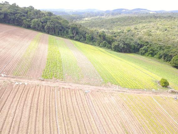 L. Terrenos 90% Planos Em Ibiúna, 1200m2