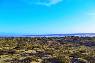 Parcela 10000 M2 En Los Choros (playa Grande)