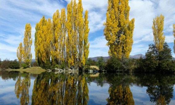Hectarea Con Costa De Rio Carrileufu Terreno En Patagonia