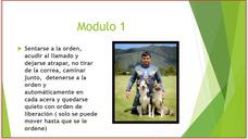 Clases De Adiestramiento Canino Por Modulos