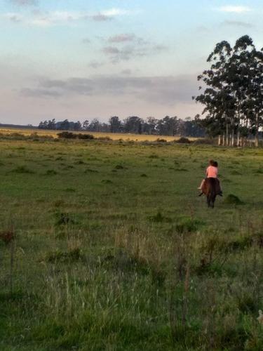 Buscamos Campos En Venta