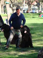Entrenador Profesional Especialista En Conducta Canina