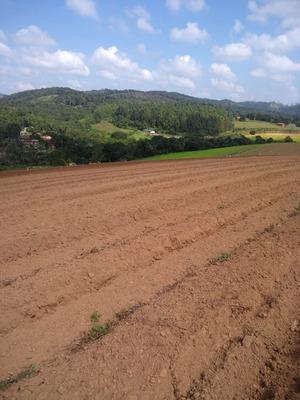 L. Lotes Demarcados,área Próxima A Comércios, Ibiúna