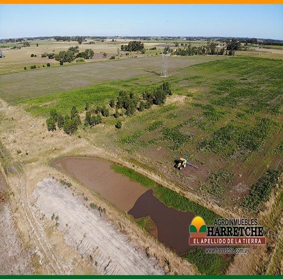Campo Venta Agrícola Ganadero 34 Hás Los Cerrillos