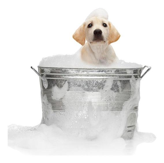 Apostila Aprenda Tosar E Dar Banho Em Cães
