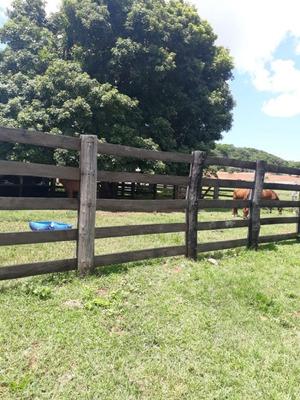 Fazenda A Venda Em Rio Negro - Ms (pecuária) - 1022