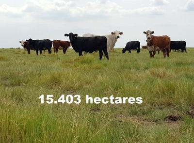 Fazenda Com 15.403 Hectares Em Corrientes - Argentina