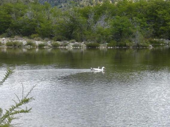 Campo De 100 Has. A 25 Km De Bariloche