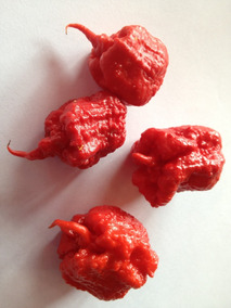50 Sementes Pimentas Carolina Reaper Original. Exclusive