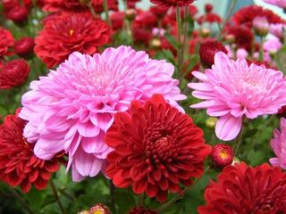 Sementes De Flores De Gostam De Sol No Mercado Livre Brasil