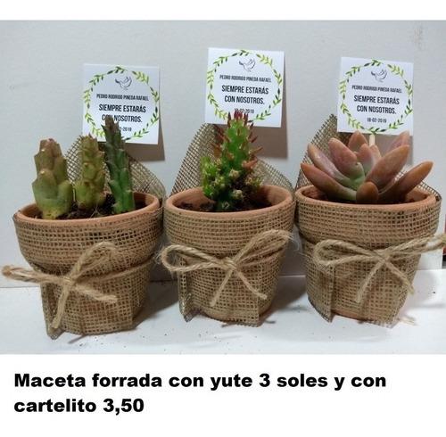 Cactus Y Suculentas  Matrimonios Bautizos Baby Shower Misas