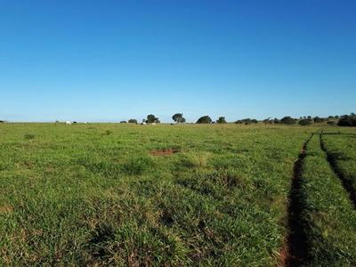 Fazenda A Venda Em Coxim - Ms (pecuária) - 799