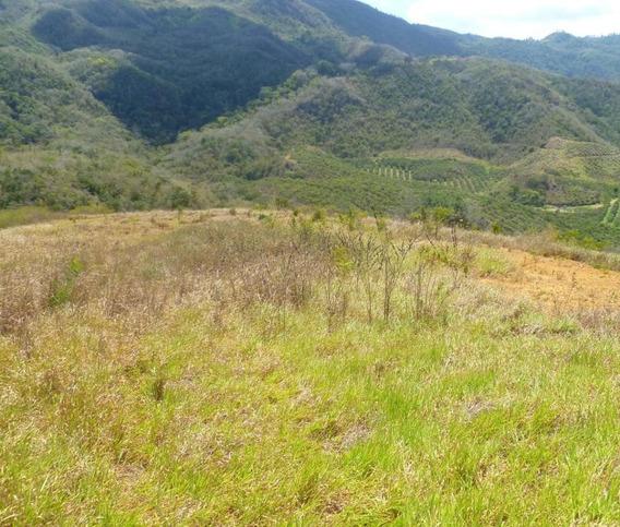 Finca Hacienda En Venta En Yaracuy #20-10973