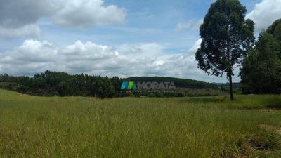 Excelente Fazenda 30 Ha Oliveira (mg) - Codigo: Fa0164 - Fa0164