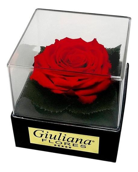 Caixa Acrílica Com Rosa Encantada Vermelha Giuliana Flores