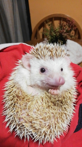 Mascota Super Mansita