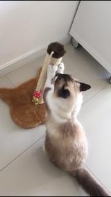 Arranhador Para Gatos Small Katy Pet