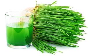 Paquete De 1kg Para Sembrar Pasto Hierba Trigo Wheatgrass