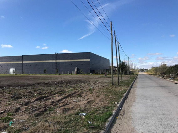 Parque Industrial Tigre - 10.000 M2 Nivelado