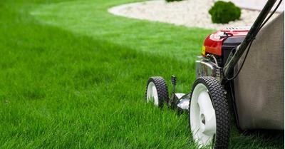 Jardinagem Para Sua Casa