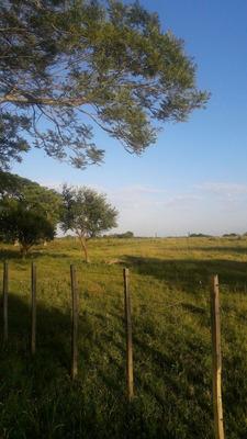 Campo Paysandú / Salto