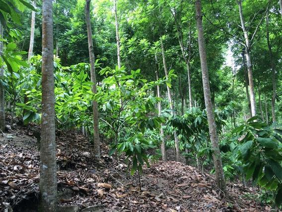 Finca 750000 Mts/de Cacaco Ecologica/ Jamao Al Norte