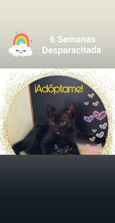 Gatita En Adopción