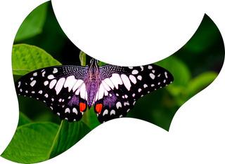 Escudo Palheteira Resinada Violão Aço Jumbo Sônica Butterfly