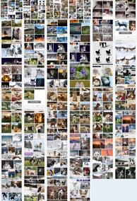 Shutterstock Imagens E Fotos De Cachorros