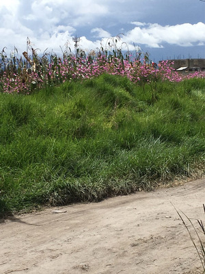 En San Mateo Otzacatipan