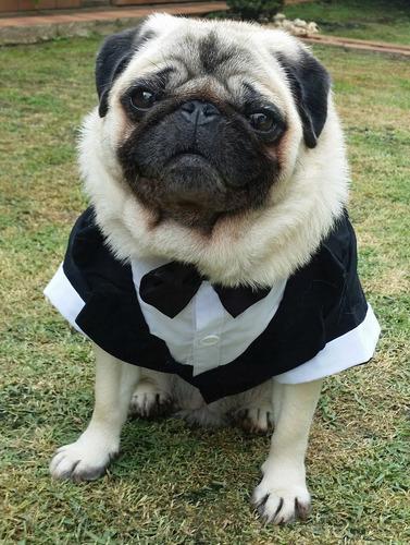 Imagem 1 de 8 de Roupa De Cachorro Ou Gato Para Casamento Terno Traje Social