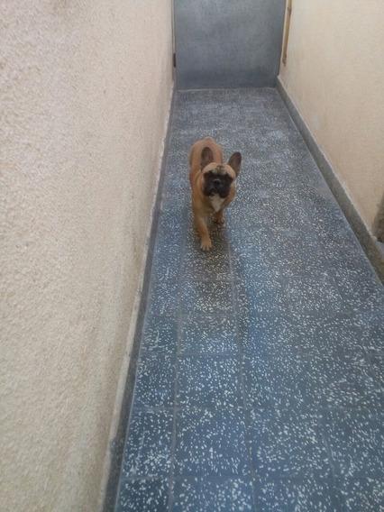 Vendobulldogs Frances Macho Va A Cumplir 1 Año