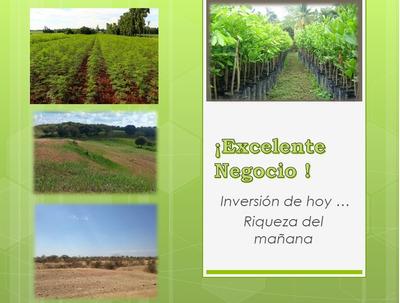 Terrenos Moringa