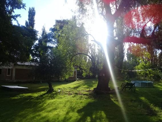 Vendo Finca De 10 Hectáreas Con Casa En San Rafael Mendoza