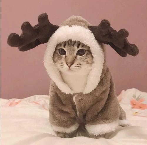 Ropa Para Gato