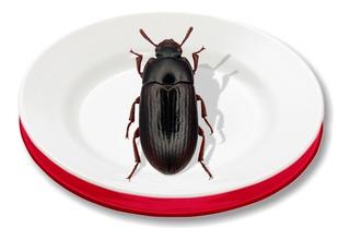 Tenebrios 10 Escarabajos Vivos De Granja, Grado Sementales.