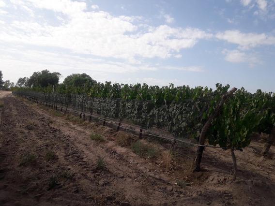 Campo 3000 Has En La Arboleda, Tupungato Mendoza