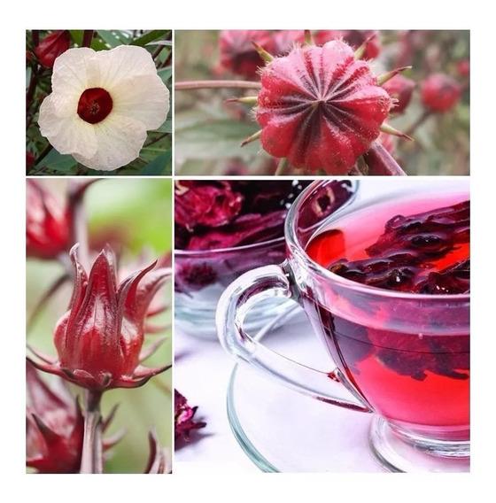 80 Sementes Hibisco Caruru Roselle Vinagreira Groselha Cuxá